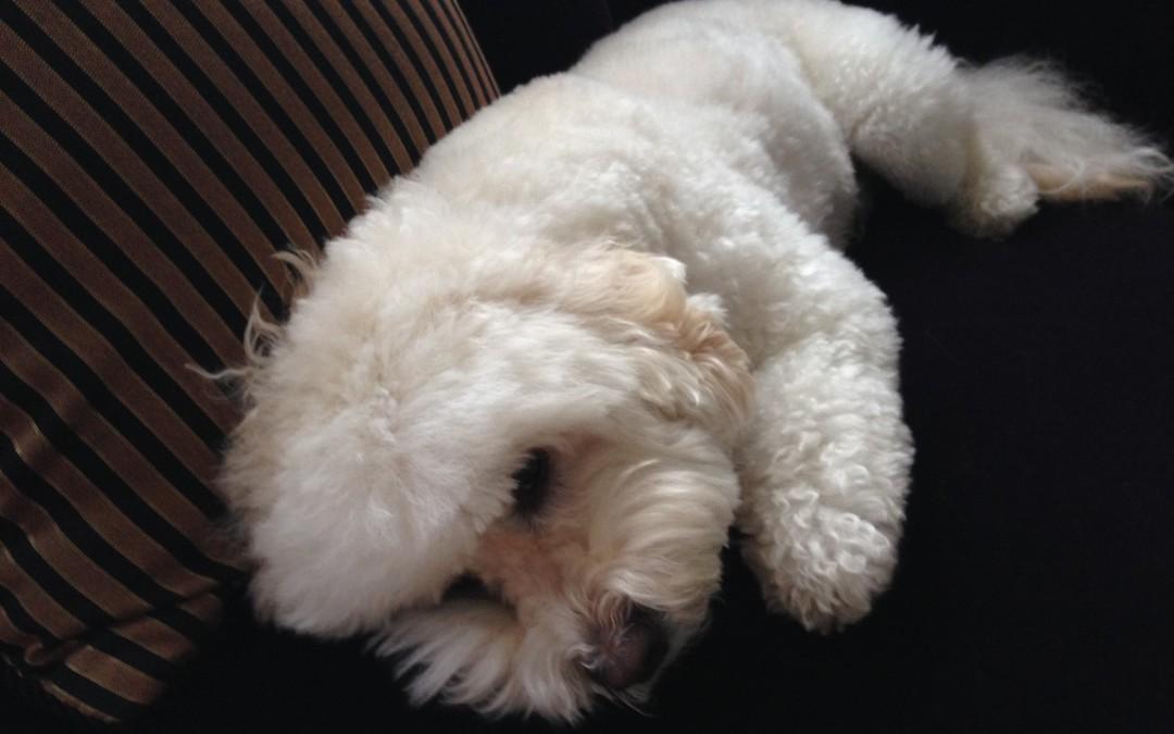 Baxter's Visit to the Vet