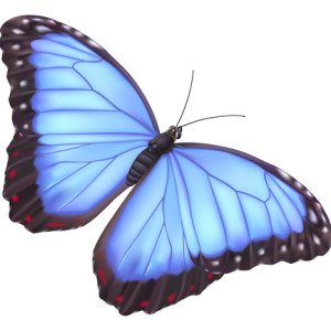 New Butterfly