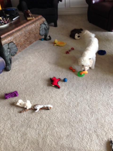 Squeaky toys!