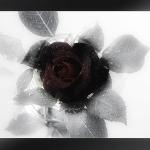 mourning-229118_640