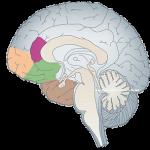 brain-blog pic