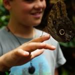 butterfly-794368_640